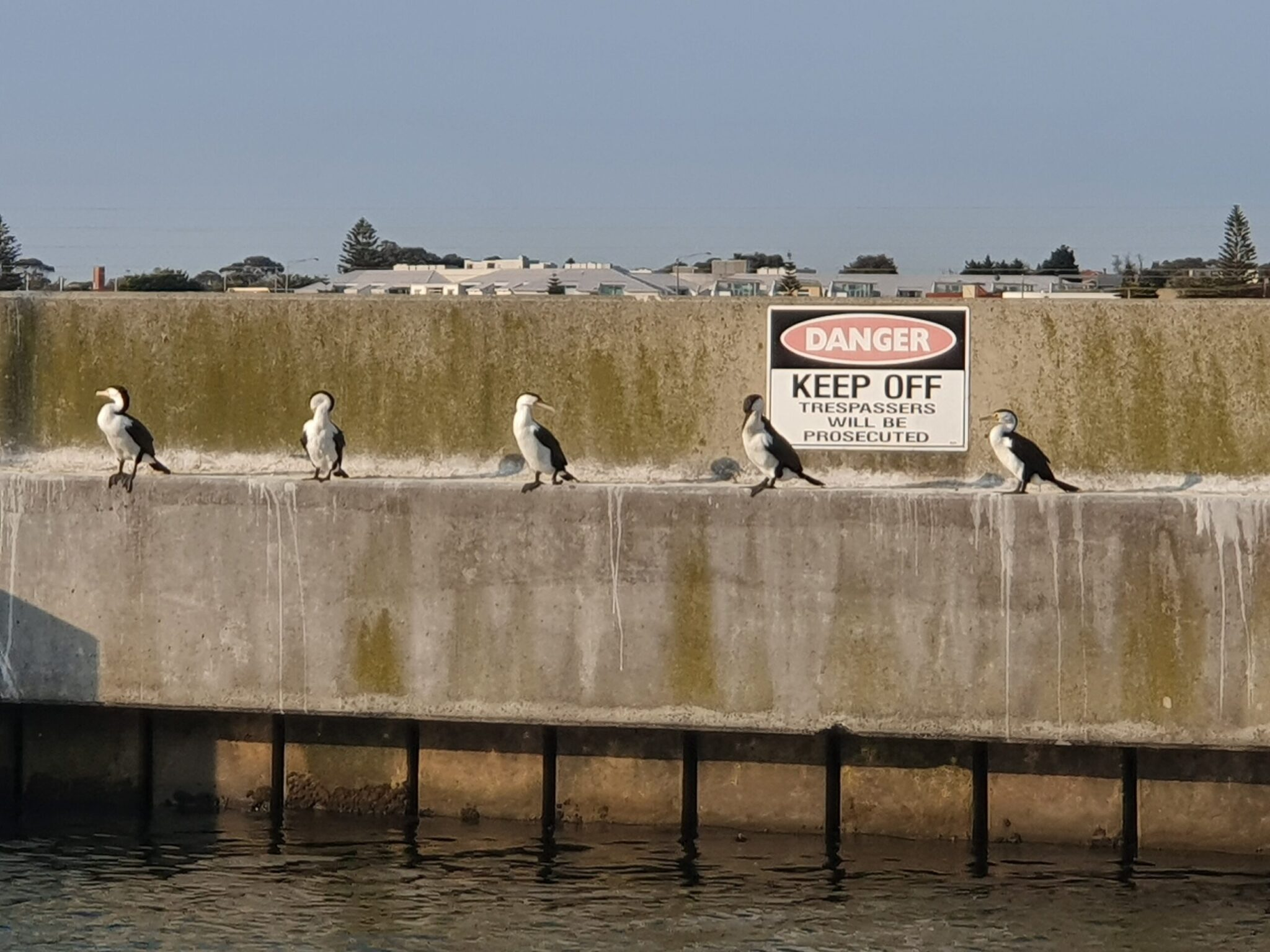 Your Port Phillip Bay home delivery